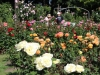 resizedimage005