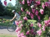 resizedimage006